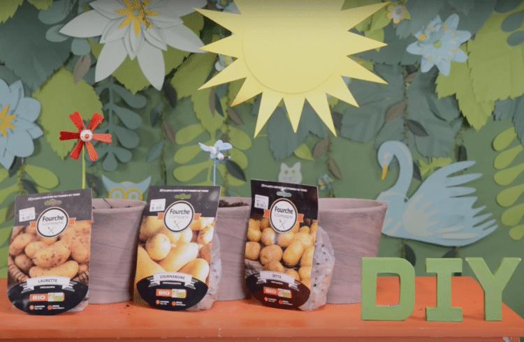 DIY Pommes de terre au balcon
