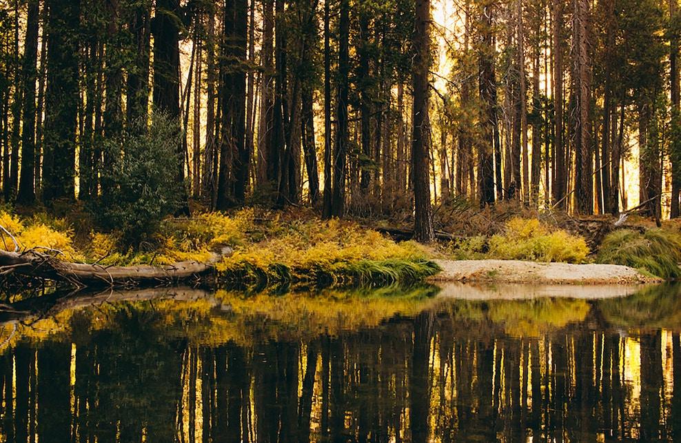 Forêt et marais