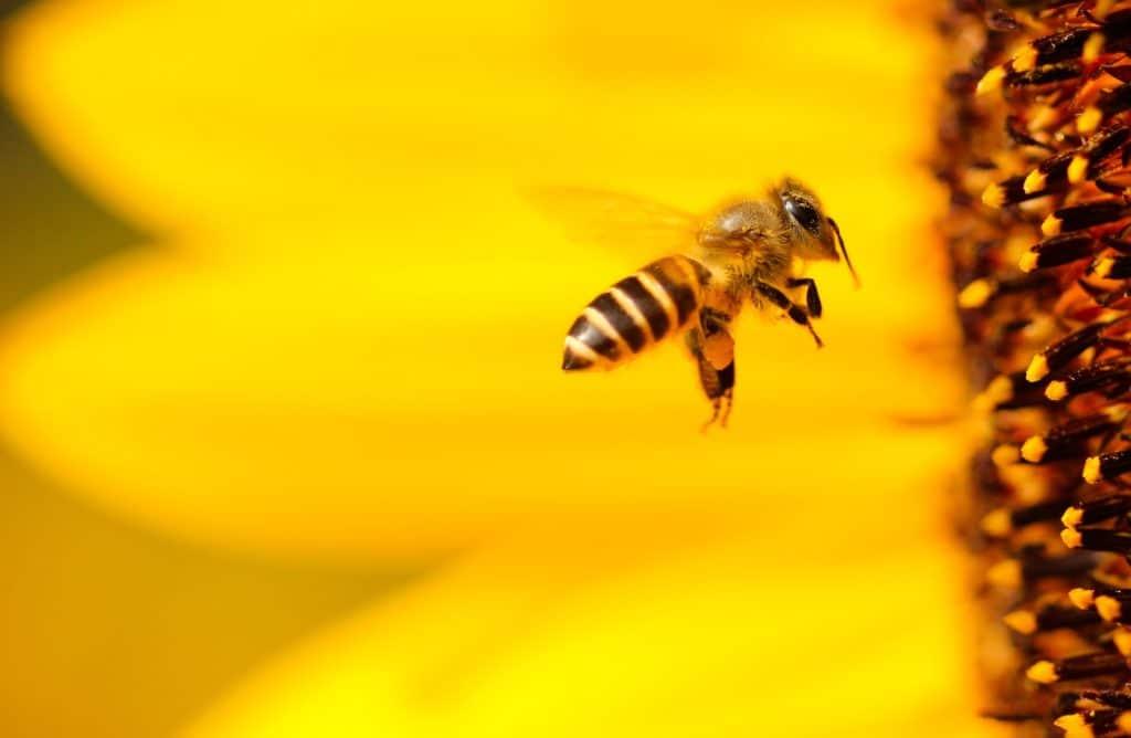 L'apithérapie : se soigner grâce aux produits de la ruche