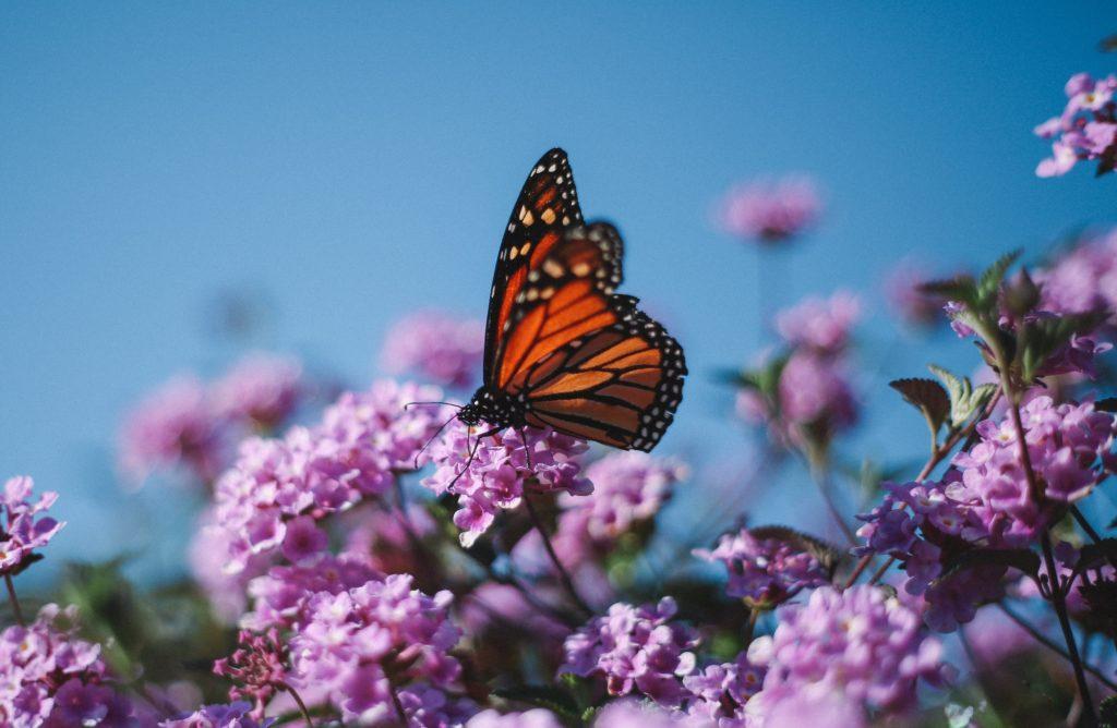 Les insectes pourraient disparaître d'ici un siècle