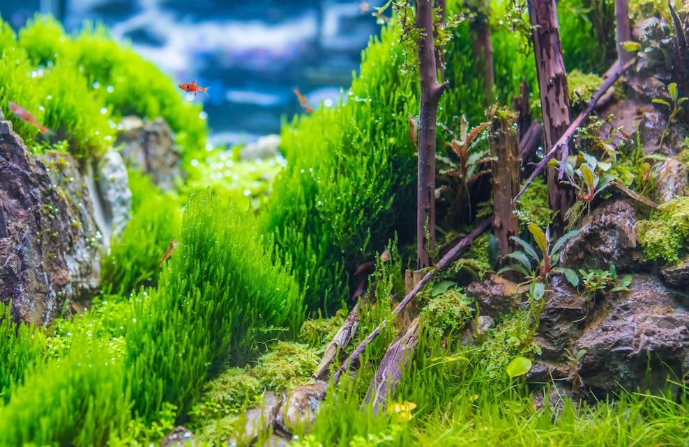 Variété de plantes aquatiques