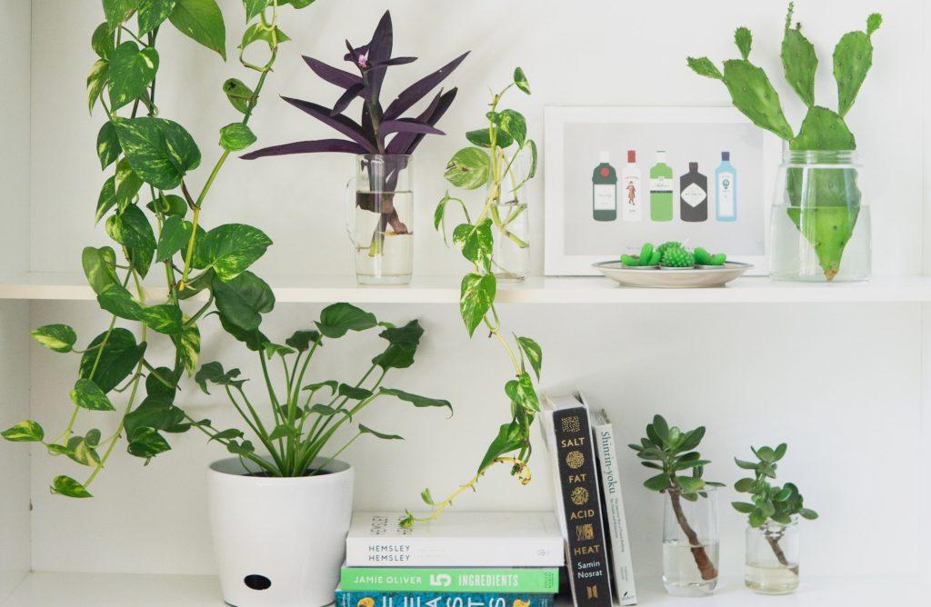 Comment protéger ses plantes pendant les vacances ?