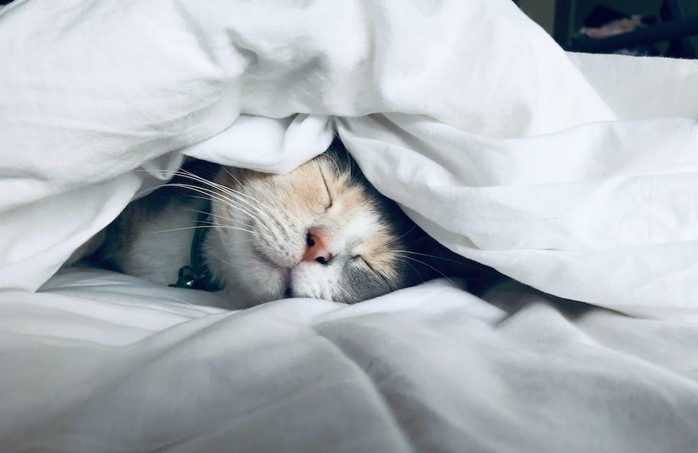 Chat dans un lit