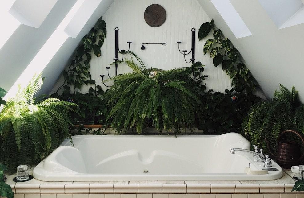 Plantes autour d'une baignoire