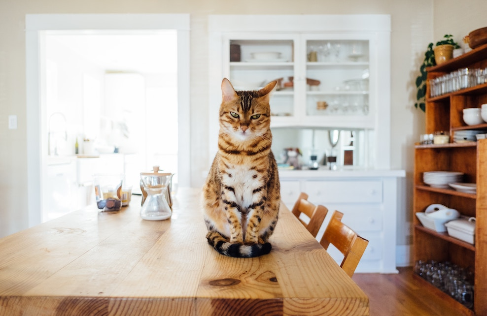Chat sur une table