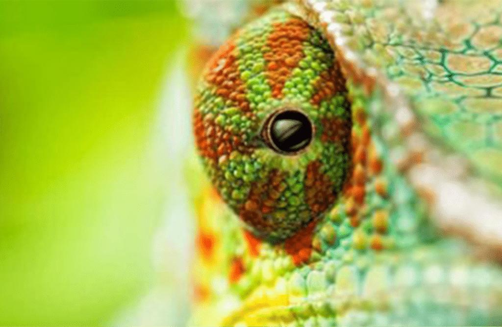 Biomimétisme : ces animaux dont on s'inspire