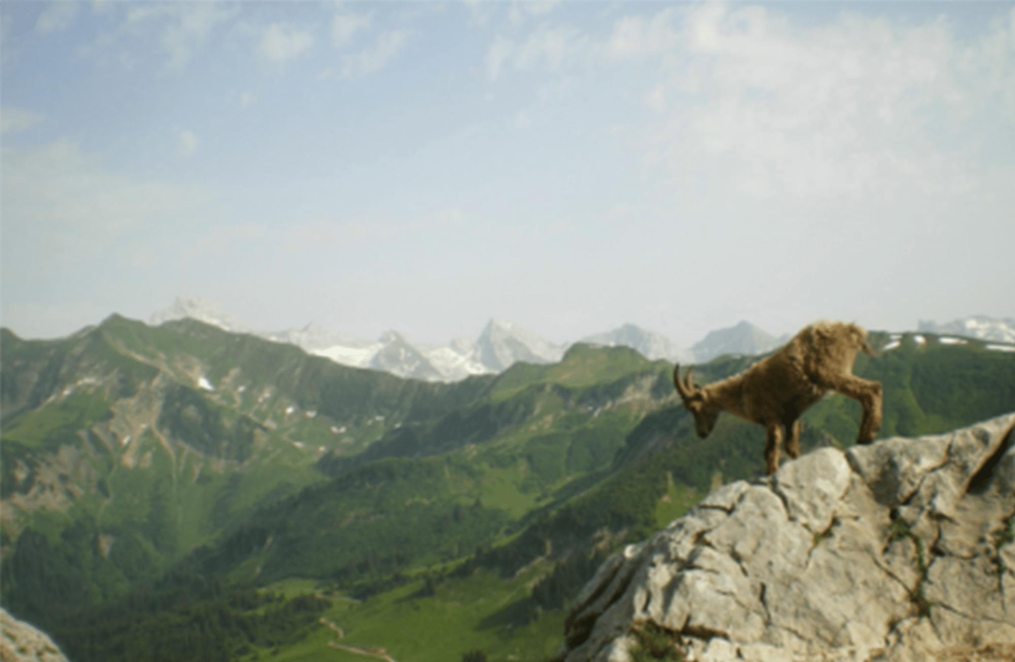 Les animaux à observer l'été à la montagne