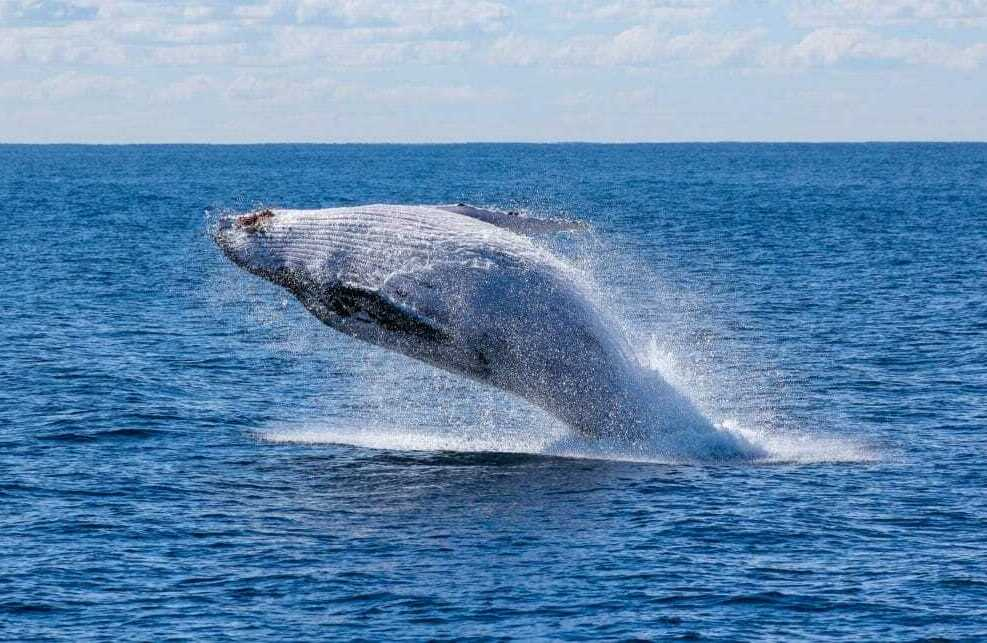Une baleine dans la mer