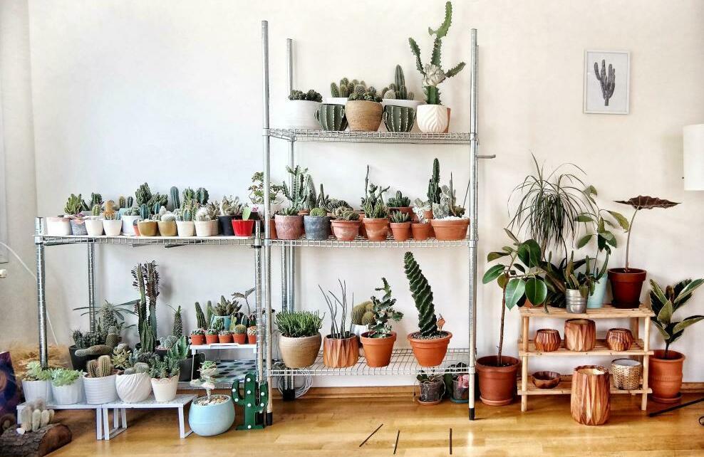 Des plantes dans un appartement