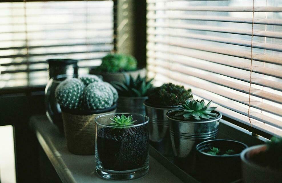 Le bon emplacement pour vos plantes