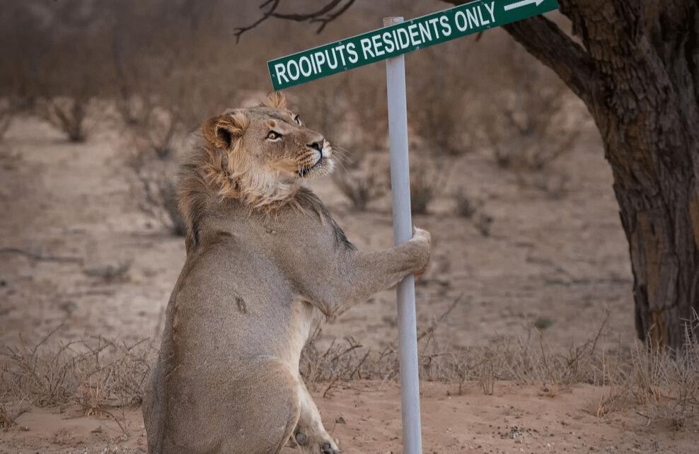 Un lion tenant une pancarte