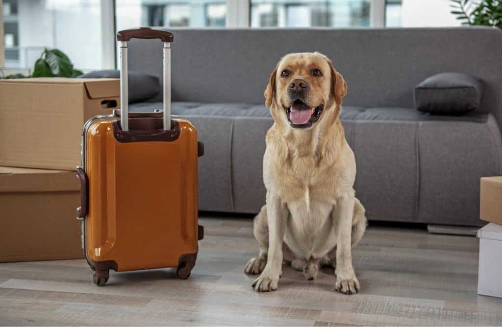Comment déménager sereinement avec son animal de compagnie ?