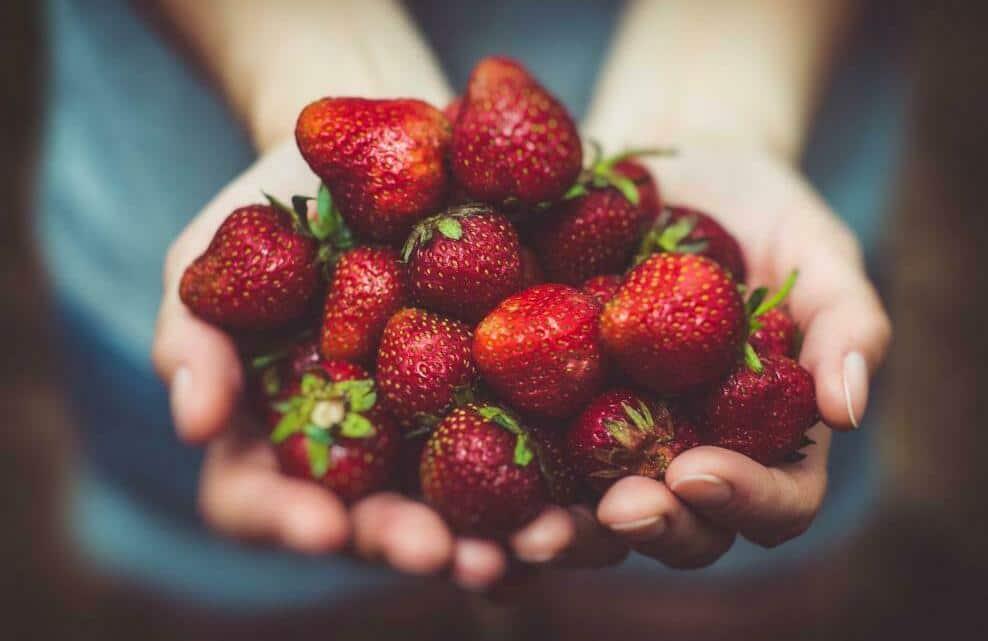 Une personne tient des fraises