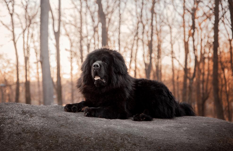 Un chien sur un rocher