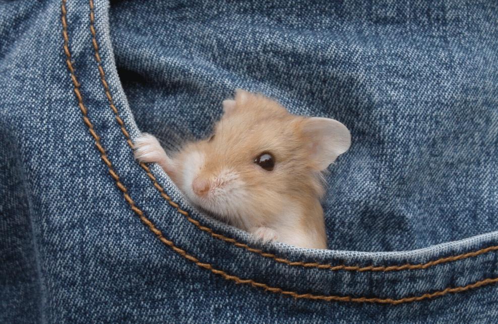 Le hamster demande beaucoup de temps