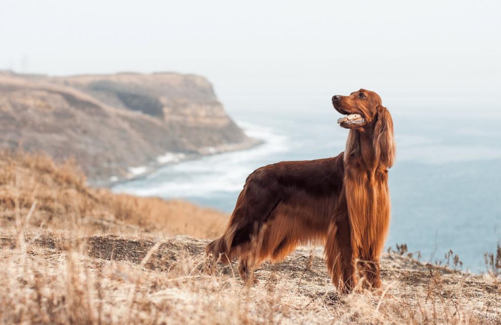 Un chien au bord d'une falaise