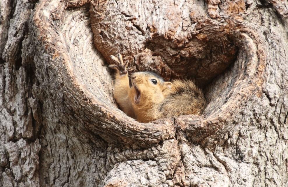 Un écureuil surpris !
