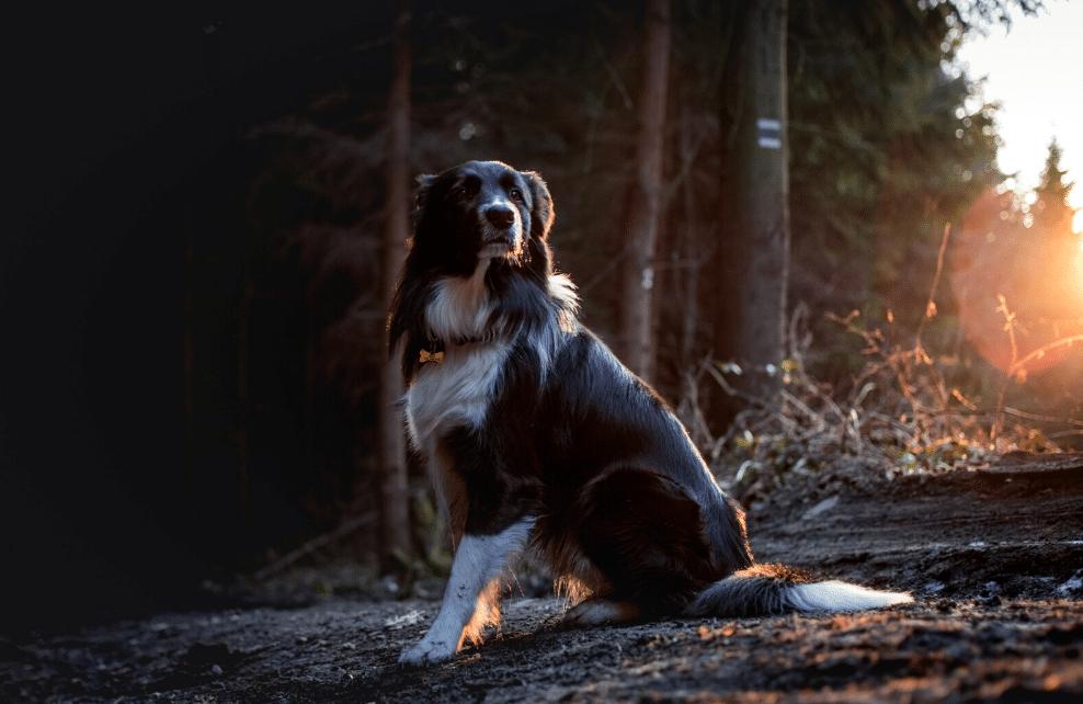 Un chien qui marque son territoire