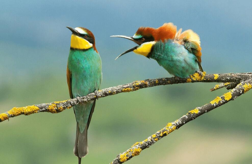 Un couple d'oiseaux se disputent