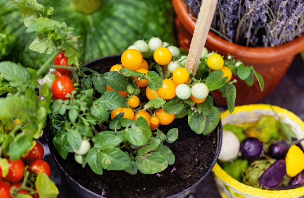 Top 10 des légumes faciles à cultiver en pot sur un balcon