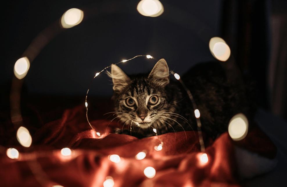 Un tipi pour chat
