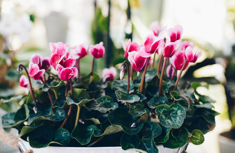 Pour l'hiver, privilégiez des plantes résistantes au gel