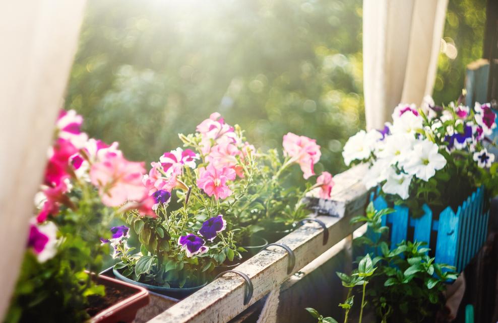 Pour vous faciliter la tâche, choisissez des plantes à floraison longue