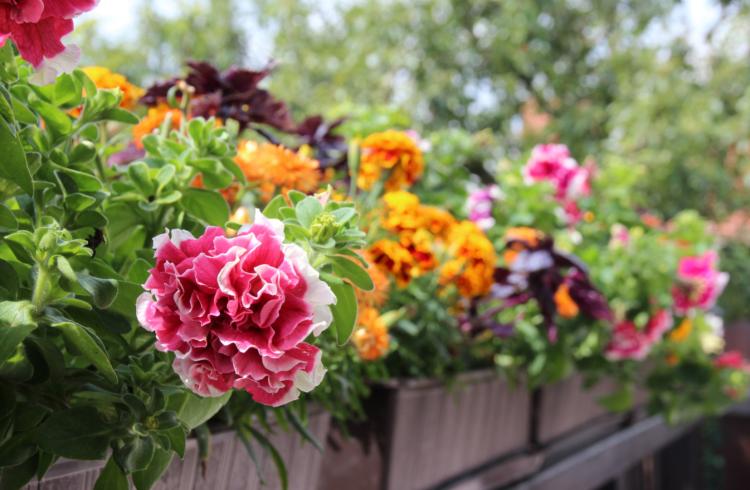 Un jardin fleuri toute l'année