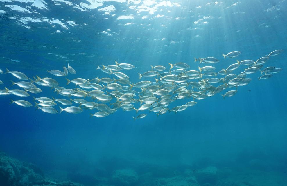 On se réchauffe à la manière des poissons