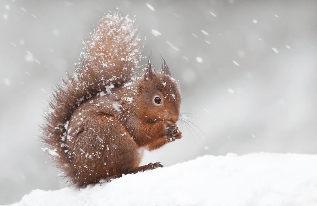 Les 7 stratégies animales dont il faut s'inspirer pour résister à l'hiver