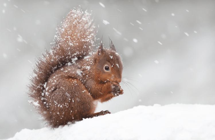 7 stratégies adoptées par les animaux pour survivre en hiver