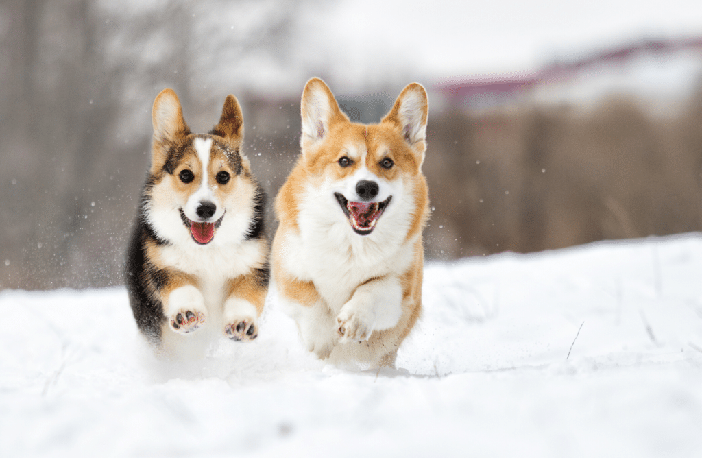 Renforcer les défenses immunitaires de son chien pendant l'hiver