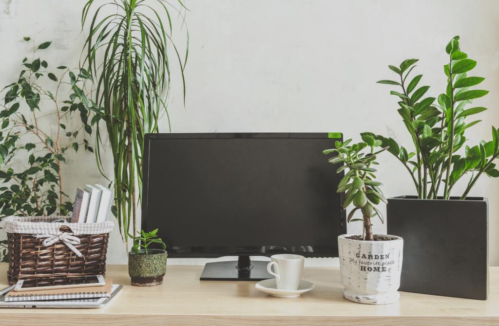 Pourquoi végétaliser son bureau est vecteur de bien-être ?