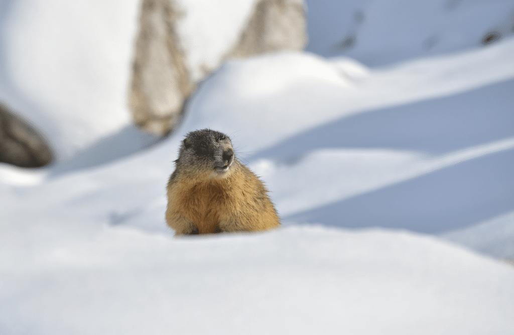 Tout savoir sur l'hibernation des animaux