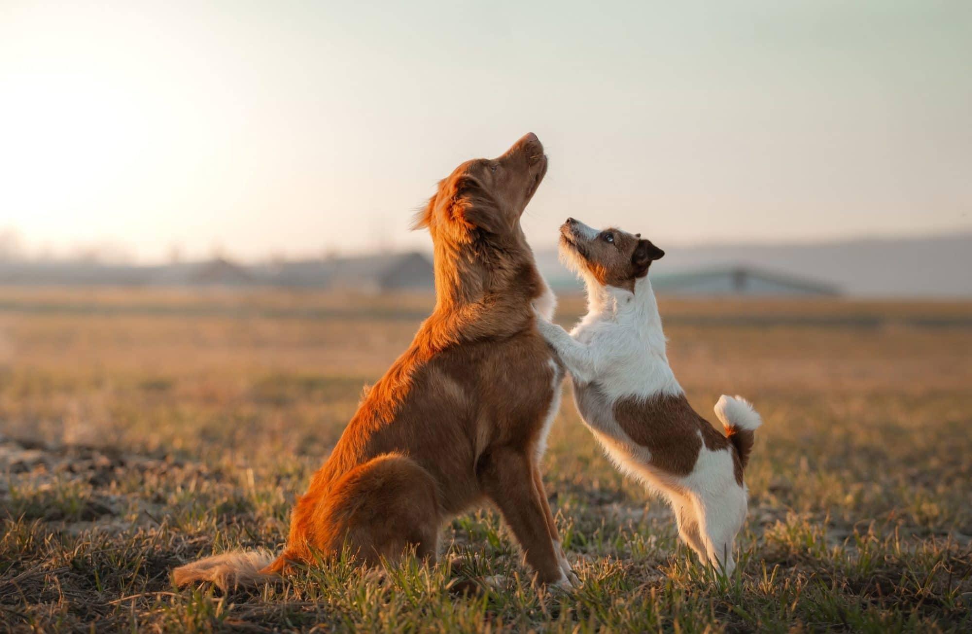 Les races de chiens de tous les records