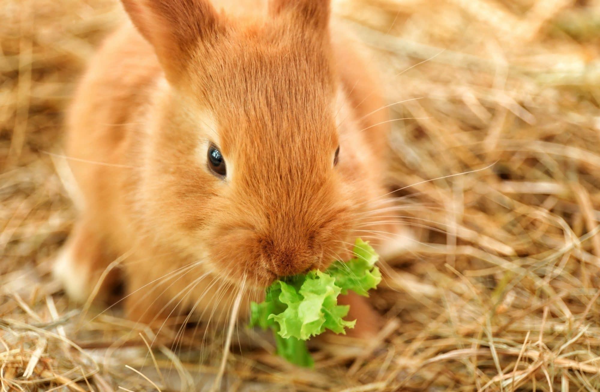 Les 8 légumes de printemps que votre lapin va adorer