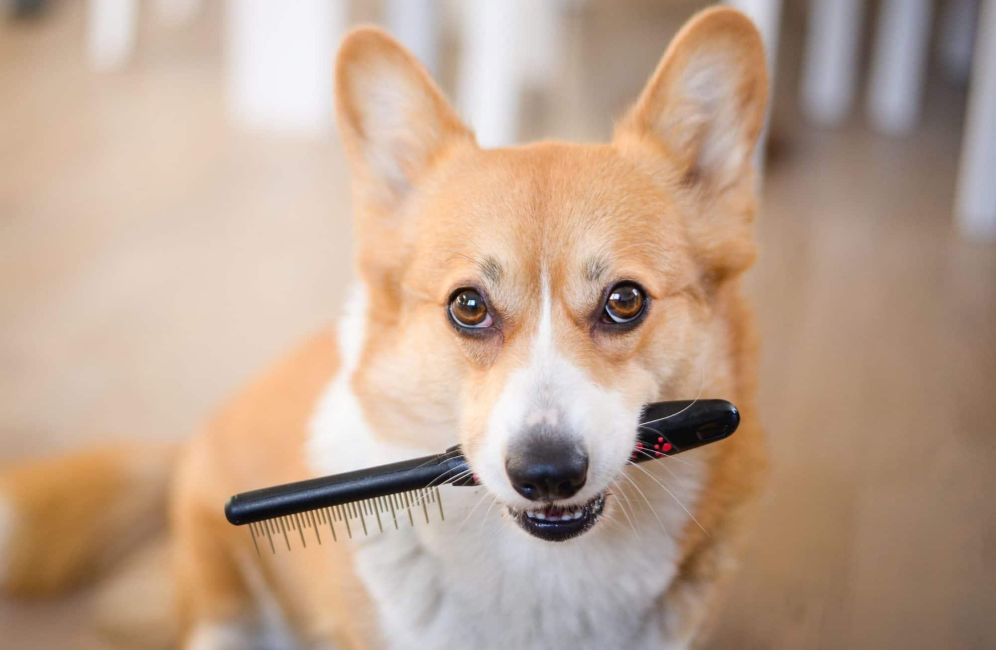 Les techniques pour toiletter son chien soi-même