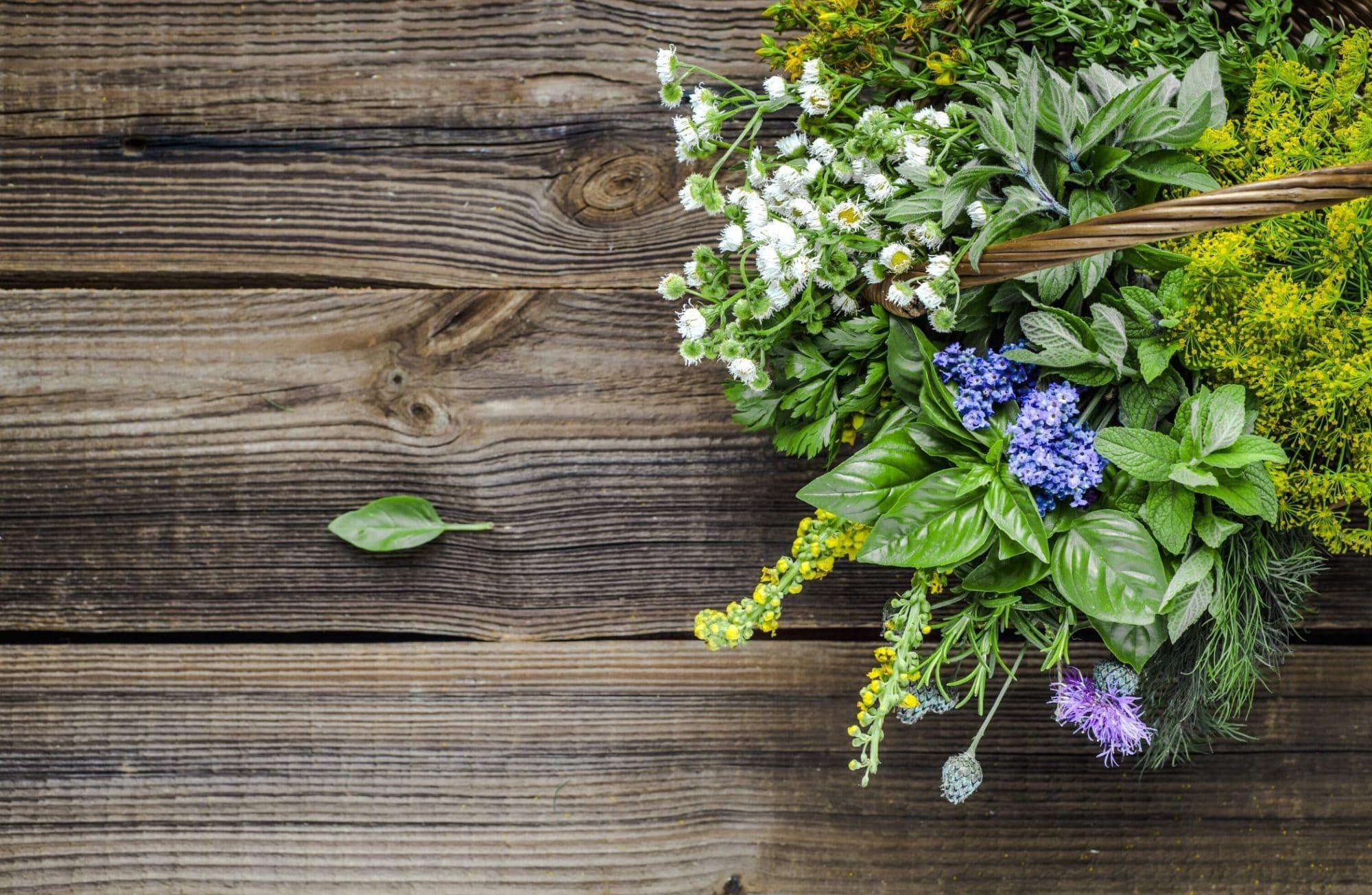 Top 5 des plantes sauvages comestibles