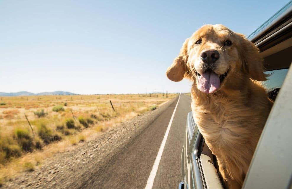 Top 5 des animaux voyageurs sur Instagram