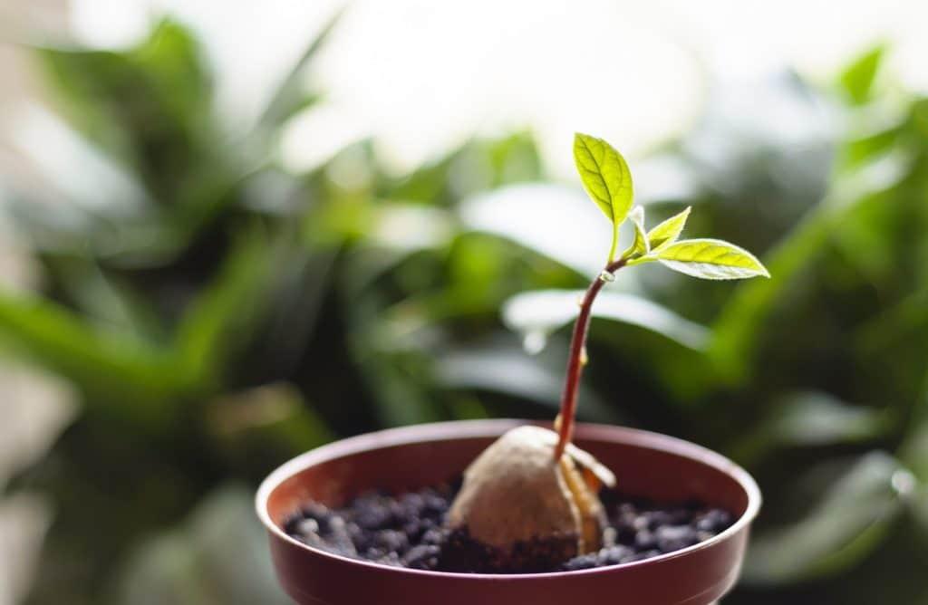 Faites pousser vos fruits et légumes à partir de leurs restes
