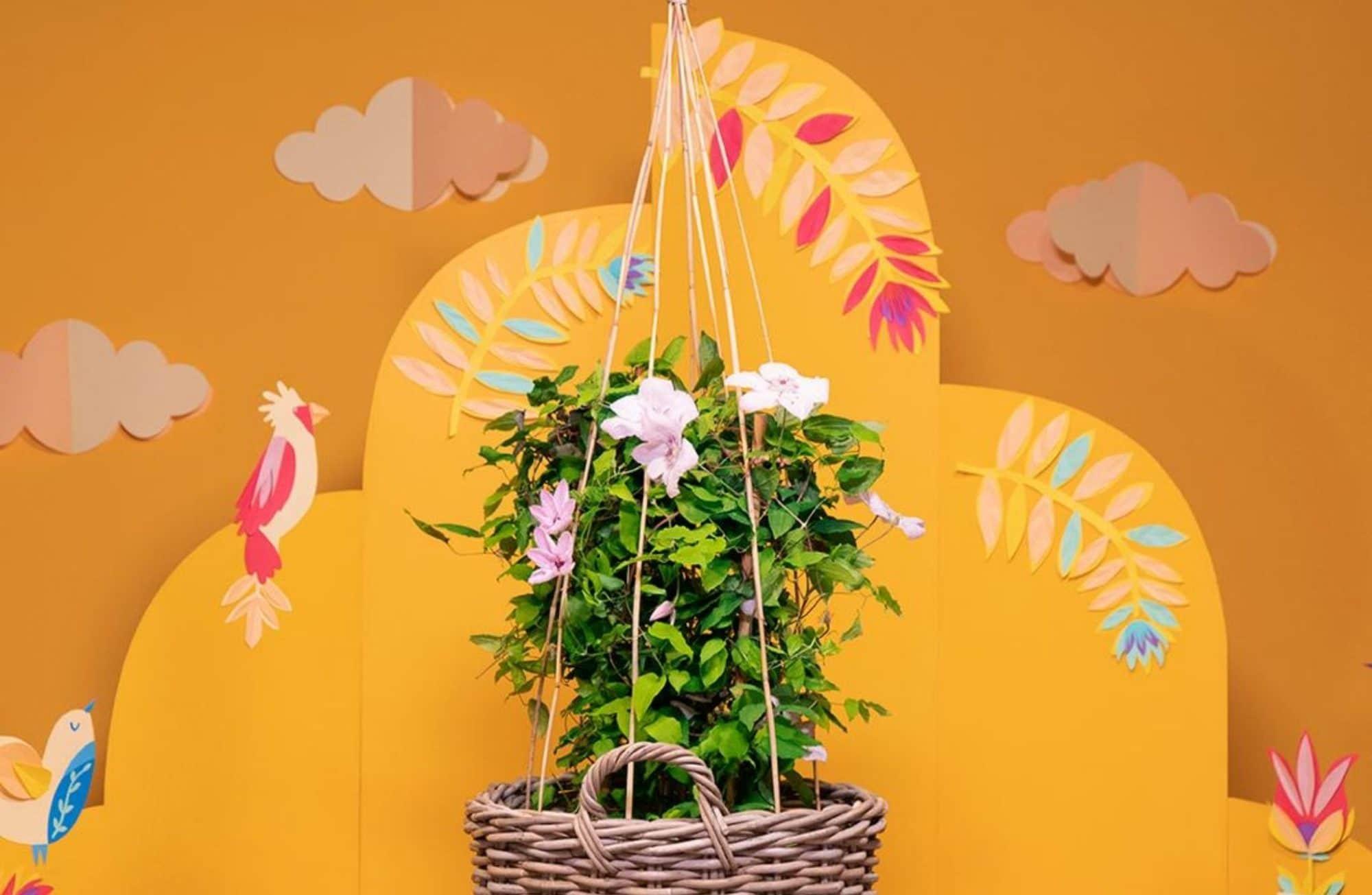 Fabriquer un panier tuteur en bambou