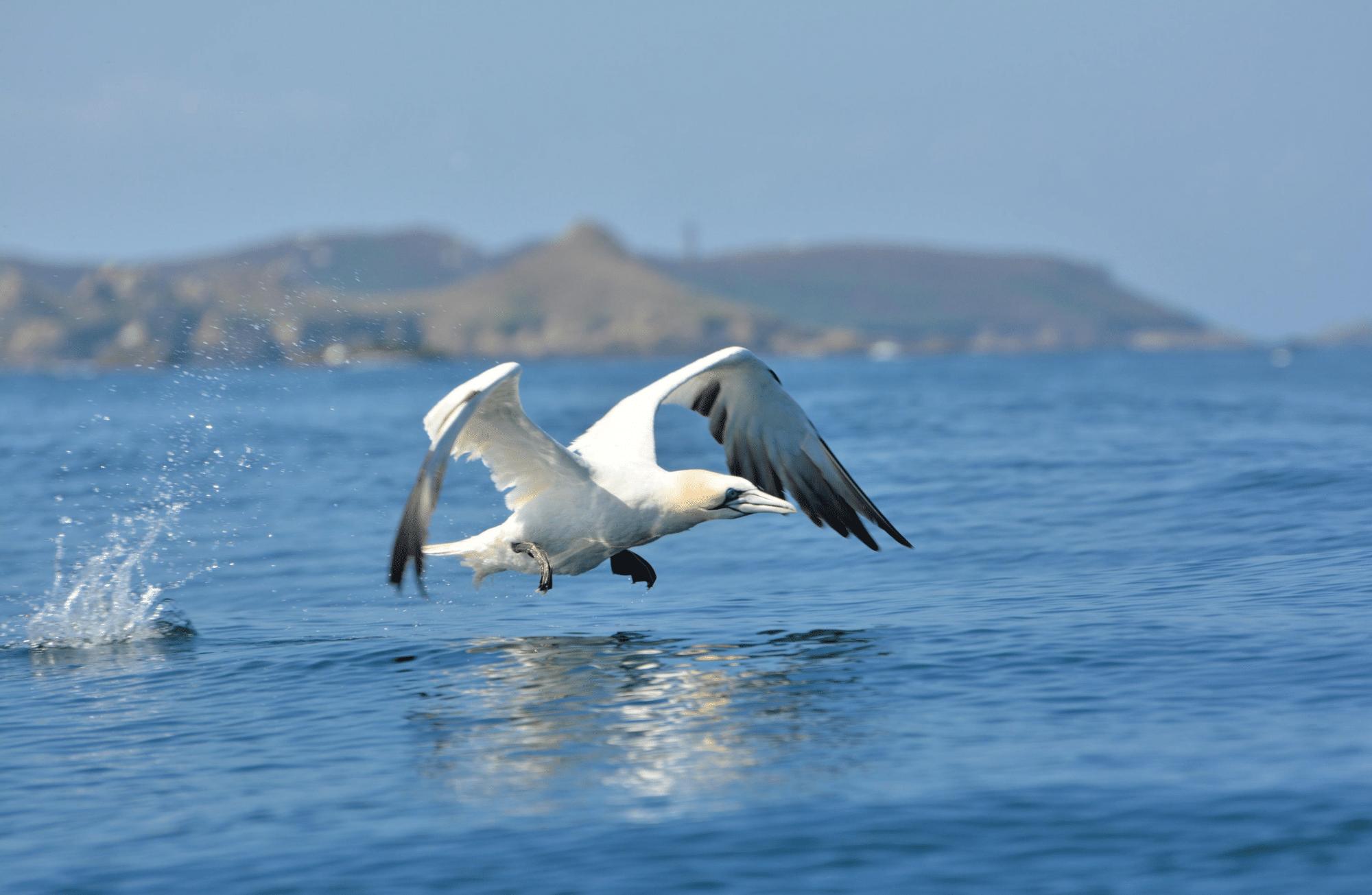 Les 6 animaux marins que l'on peut observer sur les côtes bretonnes