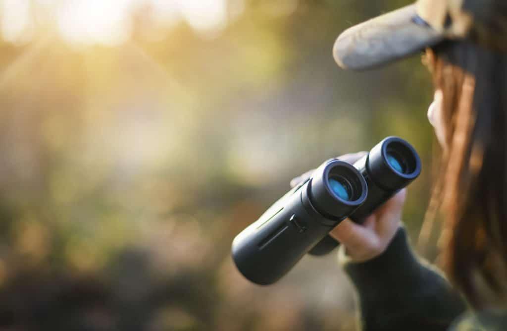 10 conseils pour observer les animaux sauvages
