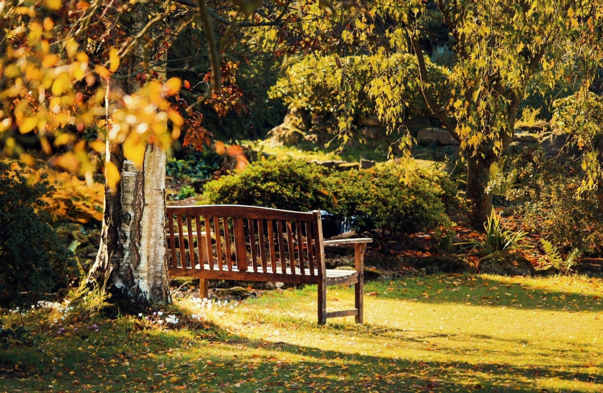 Le jardin-forêt ou forêt nourricière, une variante de l'agroforesterie