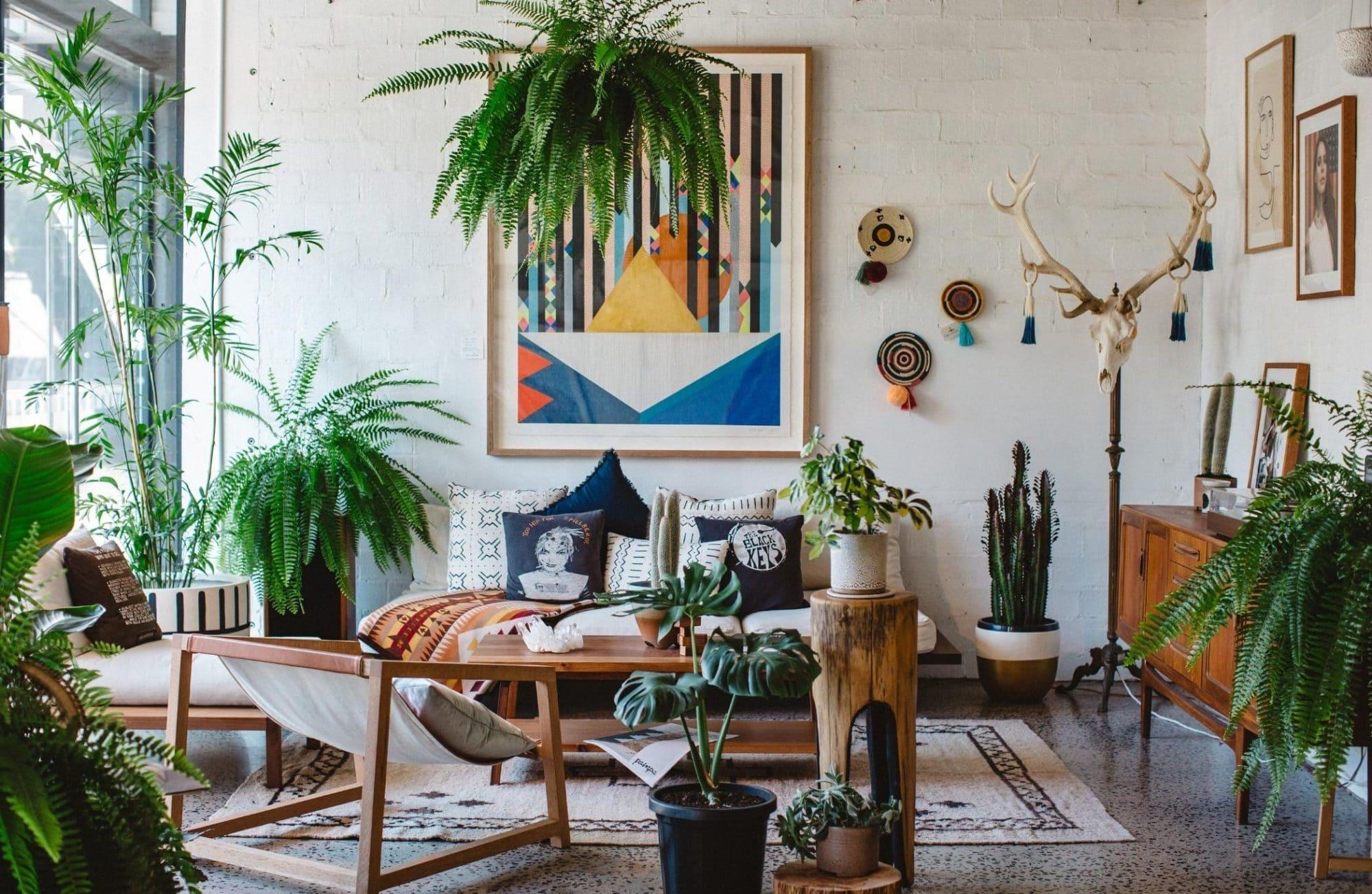 A la rencontre des collectionneurs de plantes