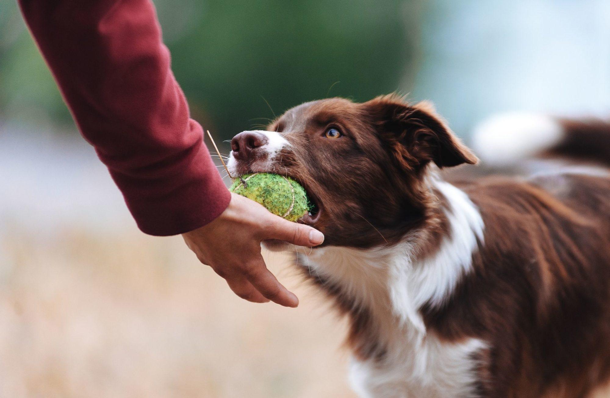 Découvrez 5 jeux pour éduquer votre chien en le divertissant