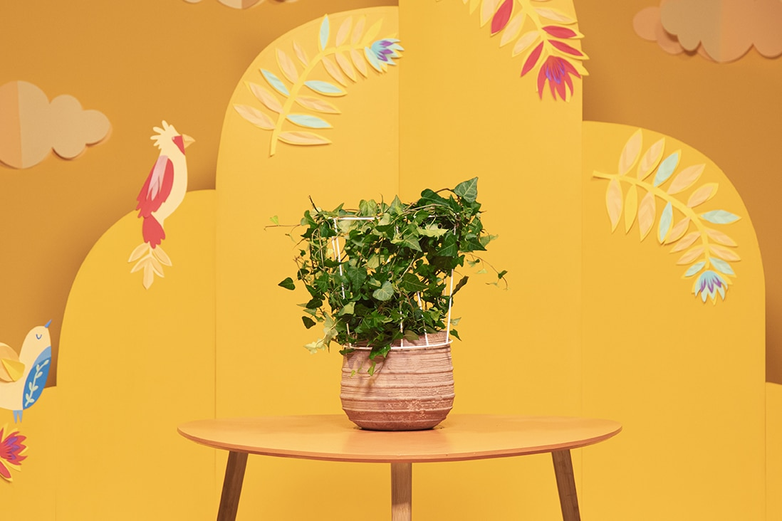 Recycler un abat-jour en tuteur pour plantes