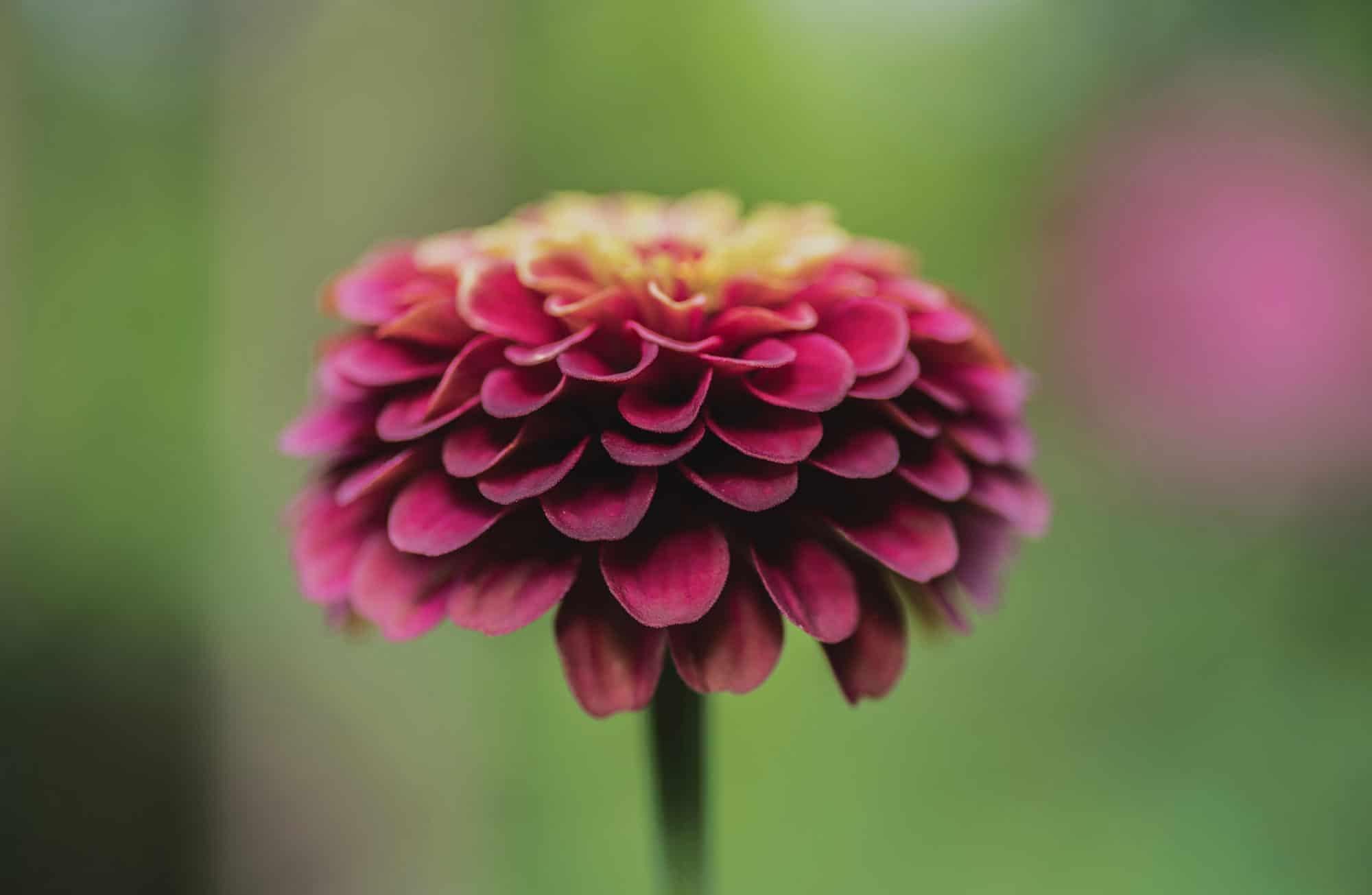 Langage des fleurs : découvrez la symbolique de fleurs d'automne