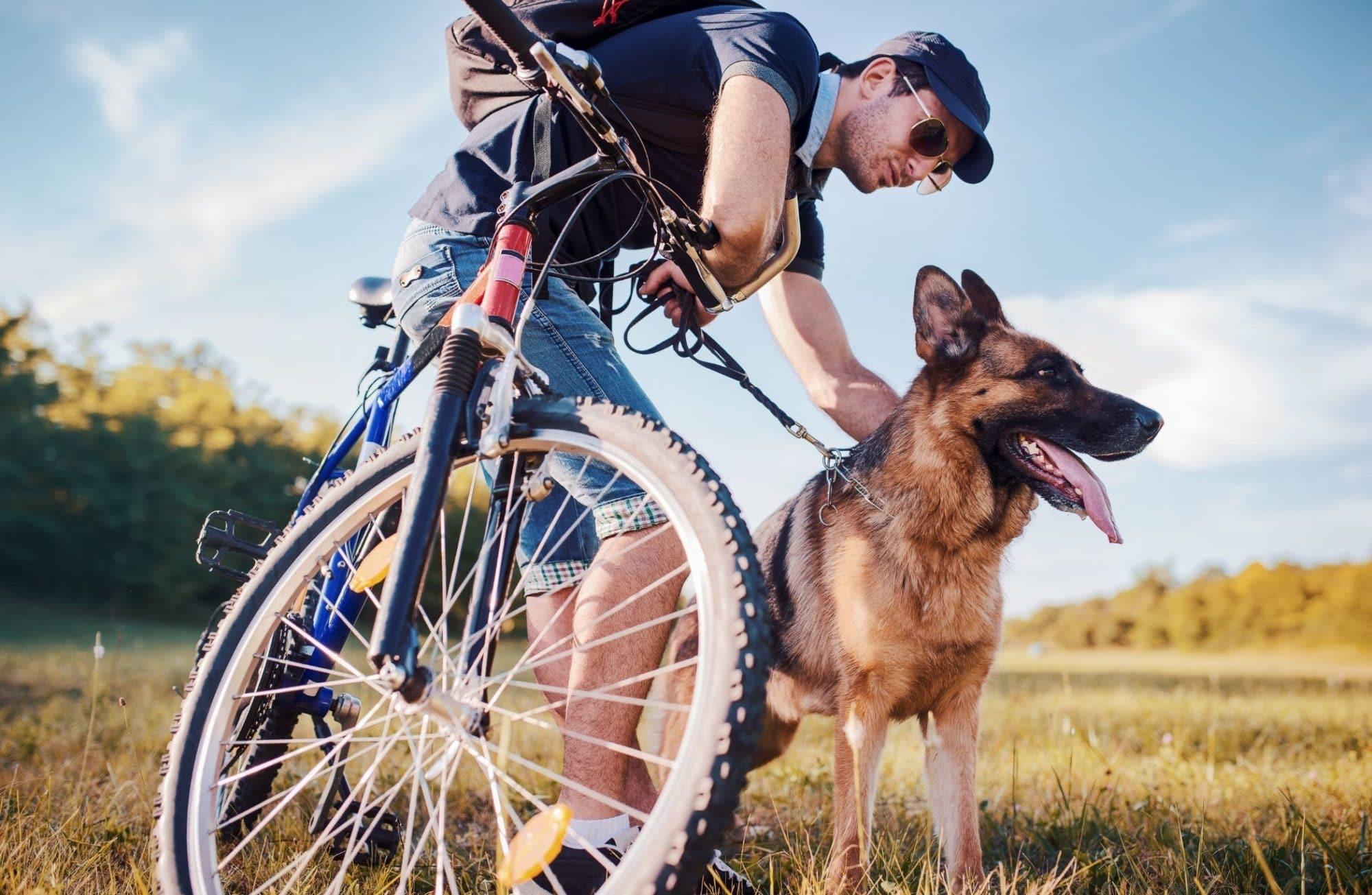 Tout sur le Cani-VTT ou comment faire du vélo avec son chien !