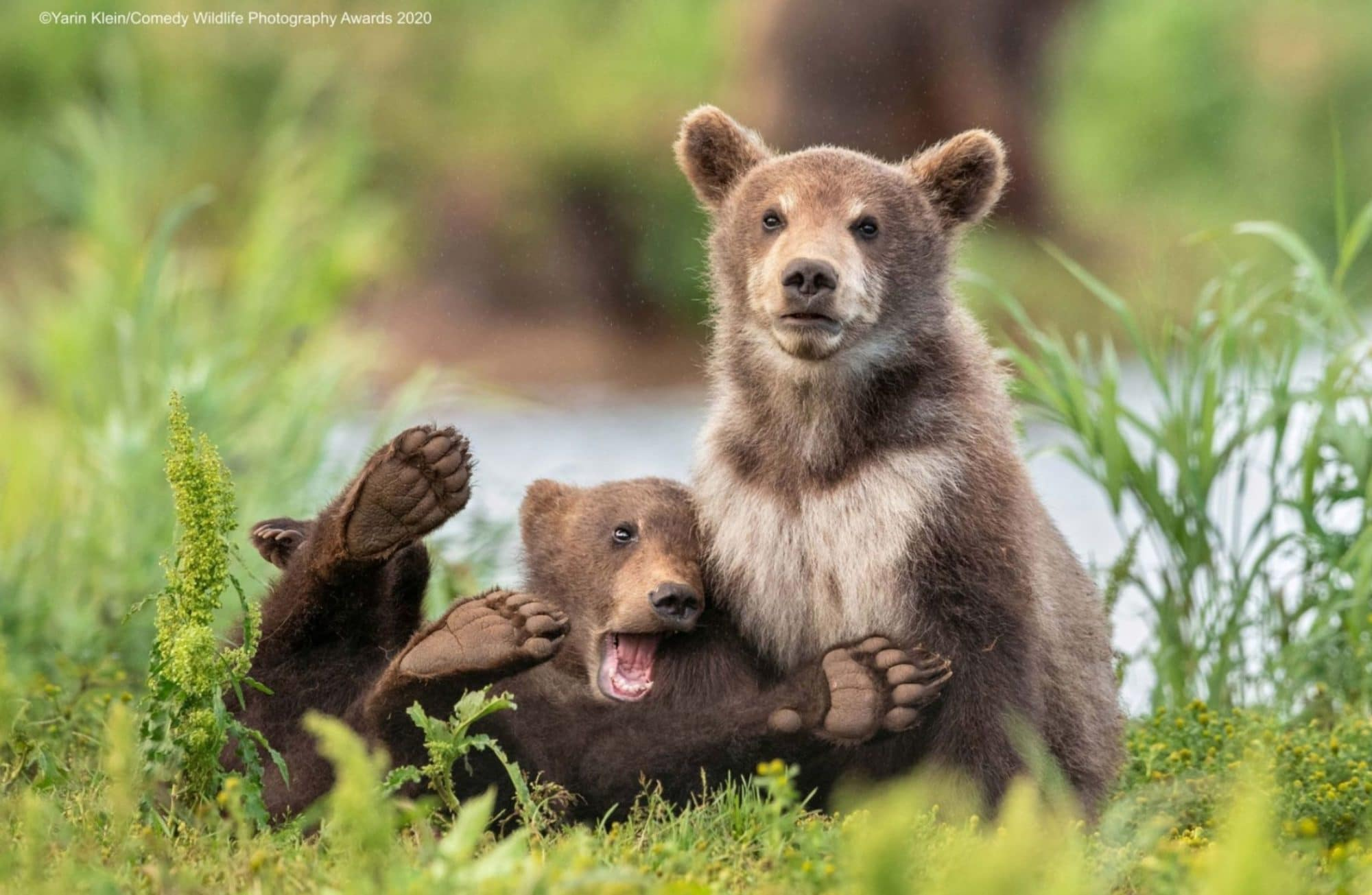 Comedy Wildlife Photography Awards 2020 : Les 15 photos d'animaux les plus fun !